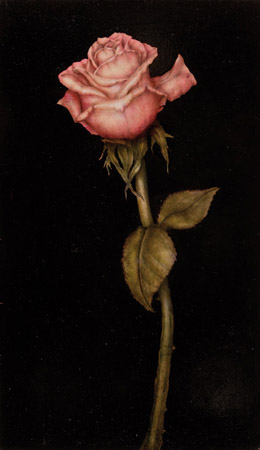 Rose - 20 x 35 - Mixed technique: pastel pencil, encaustic pastel, egg yolk tempera veiled with natural organic colours and varnished