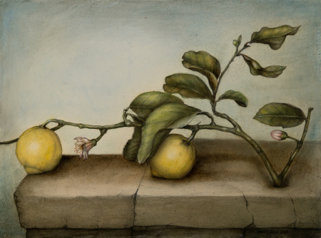 Lemons and blossoms - 30 x 40 - Mixed technique: pencil, encaustic pastel, with natural organic colours (2015)