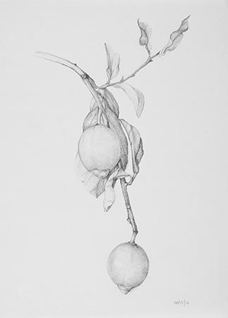 Study - Technique: pencil